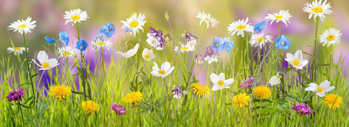 A variety of colourful and cheerful wildflowers bring up from lush green grass.