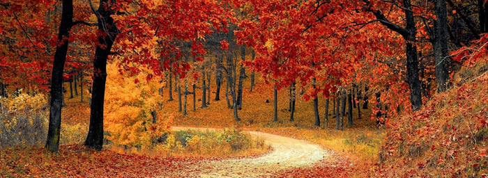 A path winds through trees whose leaves have all turned red and gold.