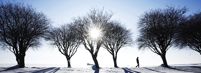 A figure walks among bare trees on a snow-covered hill under a glaring winter sun.