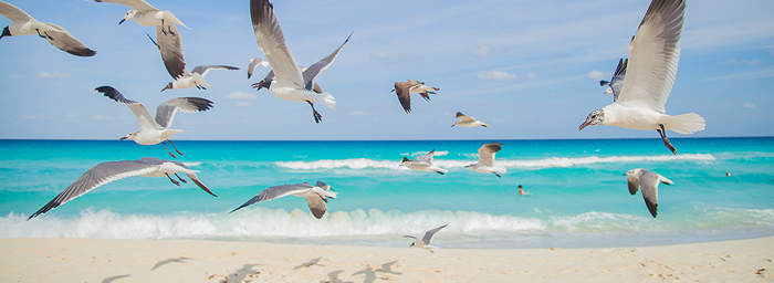 A flock of seagulls fly over a beach just as the water hits the shore.