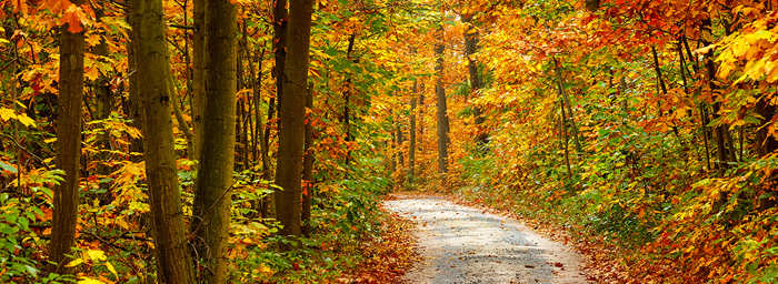 A dirt road winds through an autumnal forest with brilliant red, orange, and yellow leaves.
