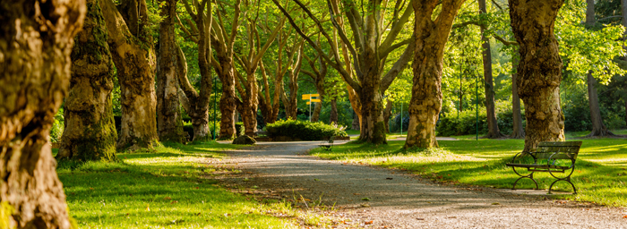 A photograph of a walking path in a wooded park. The path has a wrought-iron bench along it and is surrounded by green grass and trees with new leaves.